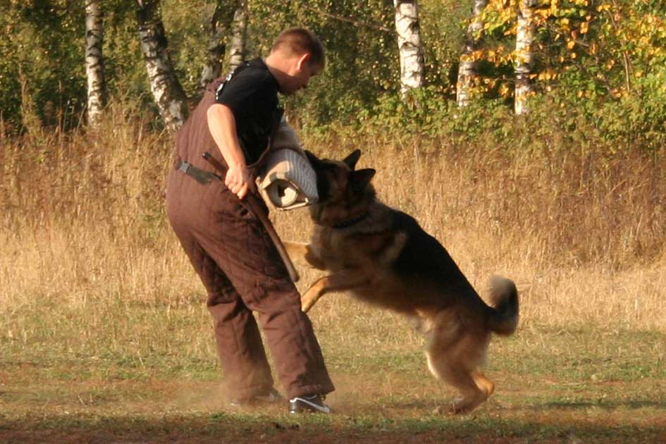 Где осуществляют дрессировку собак в Санкт-Петербурге?