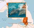 Где поплавать с дельфинами в Санкт-Петербурге?
