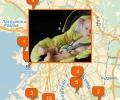Где купить детское автокресло в Санкт-Петербурге?