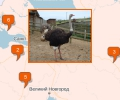 Где купить мясо и яйца страуса в Санкт-Петербурге?