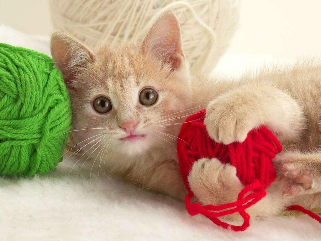 Где купить котенка в Санкт-Петербурге?