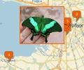 Где можно посмотреть на бабочек в Санкт-Петербурге?