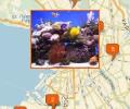 Где заказать чистку аквариумов в Санкт-Петербурге?