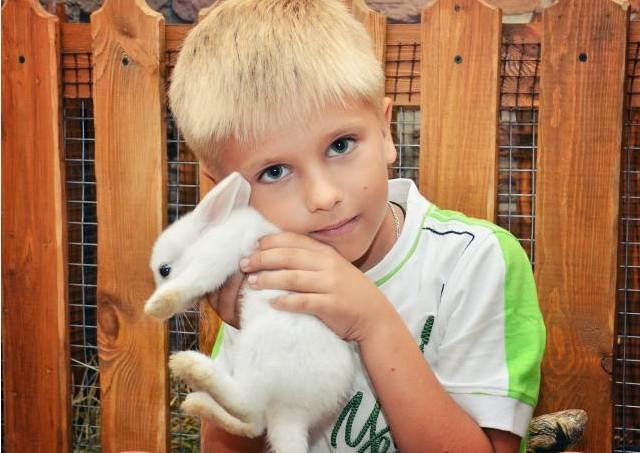 Какие контактные зоопарки действуют в Санкт-Петербурге?
