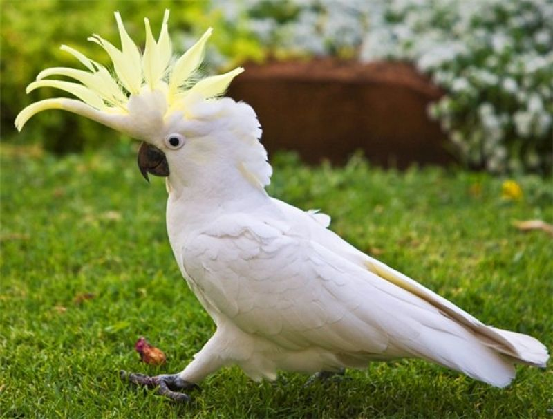 Где купить попугая и клетки в Санкт-Петербурге?
