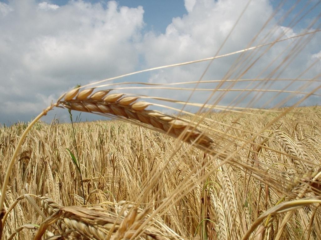 Где купить зерно в Санкт-Петербурге?
