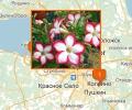 Где лучше всего купить горшечные цветы в Петербурге?