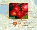 В каких питомниках купить сортовые деревья в Петербурге?