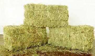Где купить сено в Санкт-Петербурге?
